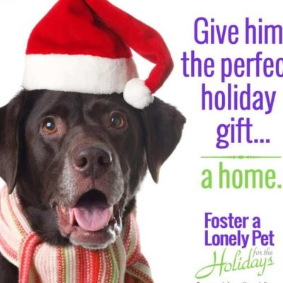 foster-dog